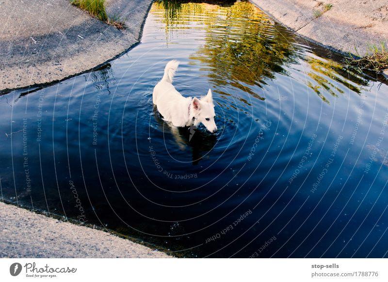 monkey heat, dog Nature Summer Warmth Garden Park Animal Pet Dog Swimming & Bathing Playing Enthusiasm Unwavering Healthy Personal hygiene Vacation & Travel
