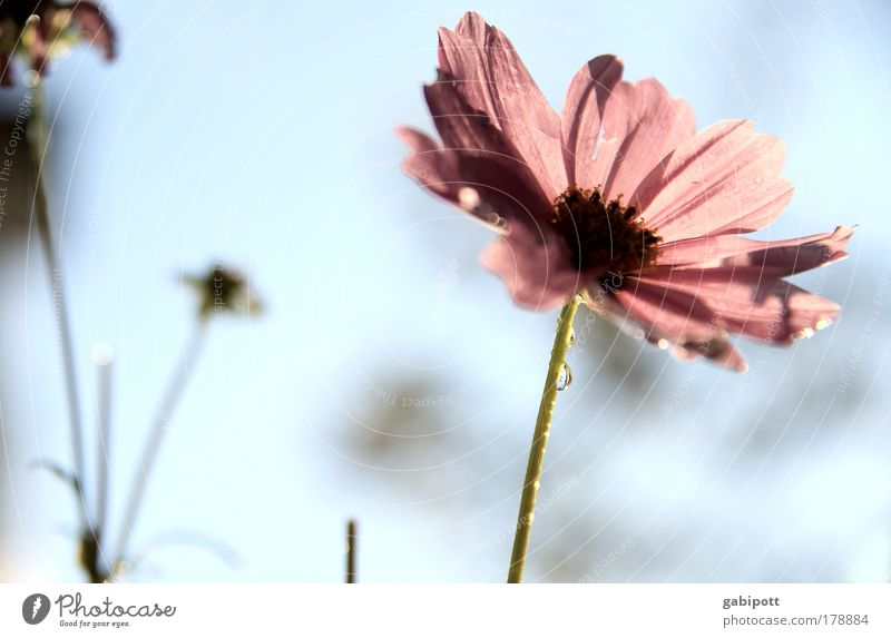 pastel Colour photo Subdued colour Exterior shot Close-up Deserted Day Back-light Shallow depth of field Worm's-eye view Environment Nature Landscape Plant