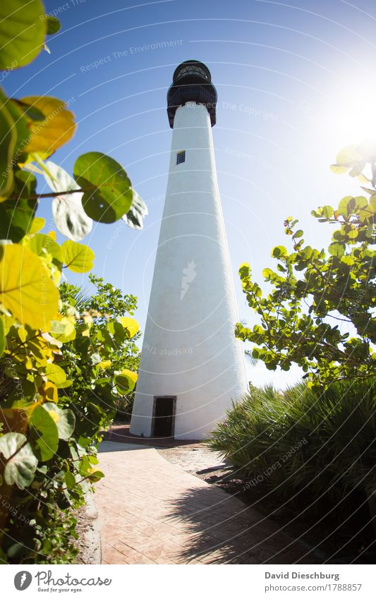 lighthouse Vacation & Travel Tourism Trip Far-off places Sightseeing Summer Summer vacation Ocean Island Landscape Cloudless sky Spring Beautiful weather Plant