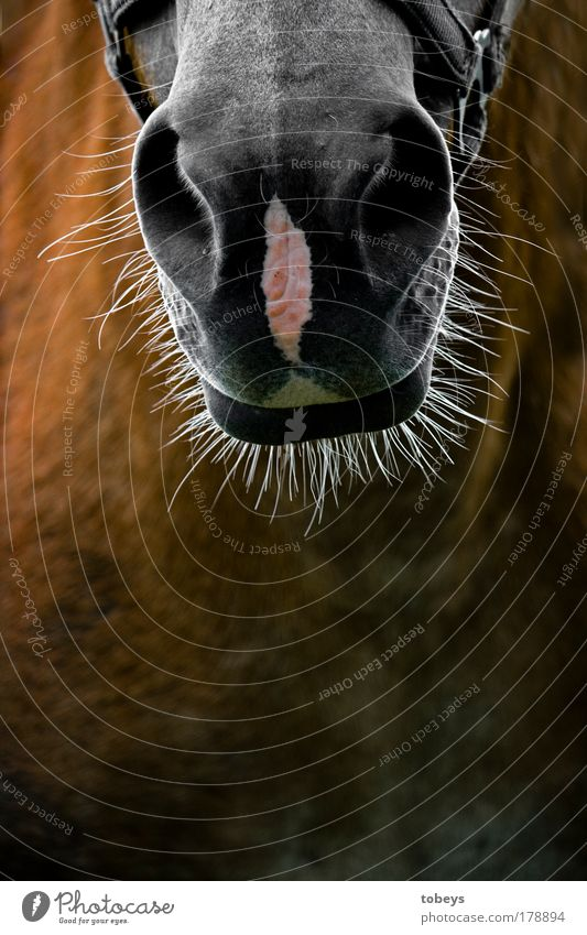 Beautiful Joy Animal Hair and hairstyles Funny Gray Day Wild animal Authentic Crazy Transience Horse Facial hair Whimsical