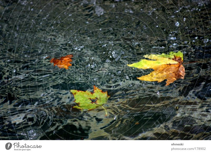 ex Colour photo Multicoloured Exterior shot Deserted Copy Space top Copy Space bottom Nature Water Drops of water Autumn Leaf Concern Grief Disappointment