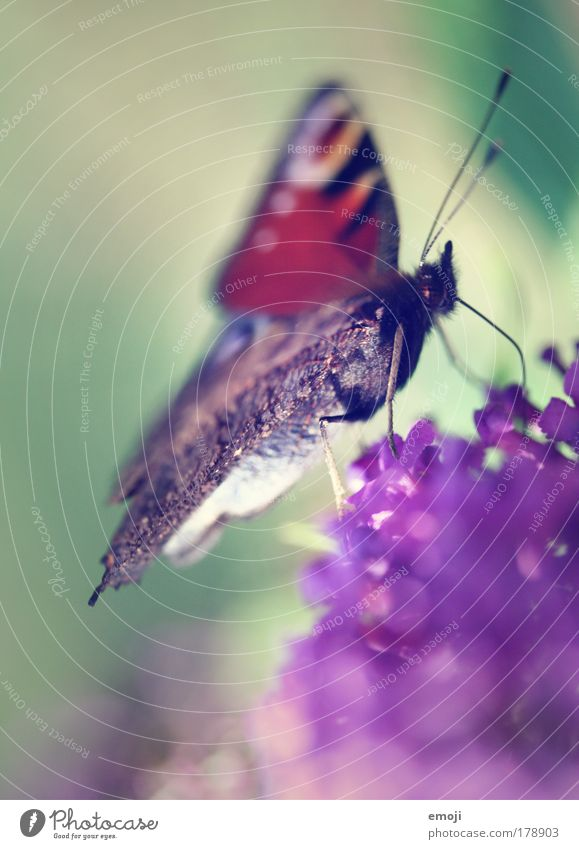 Nature Green Plant Animal Spring Park Flying Violet Wing Delicate Butterfly Easy Feeler