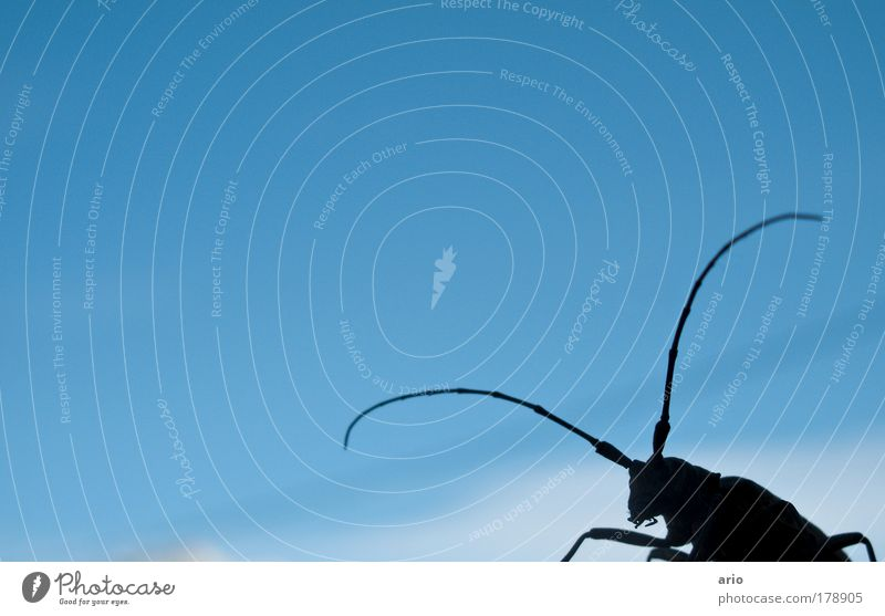 Who's coming? Colour photo Exterior shot Day Worm's-eye view Elegant Nature Animal Beetle 1 Blue Longhorn beetle