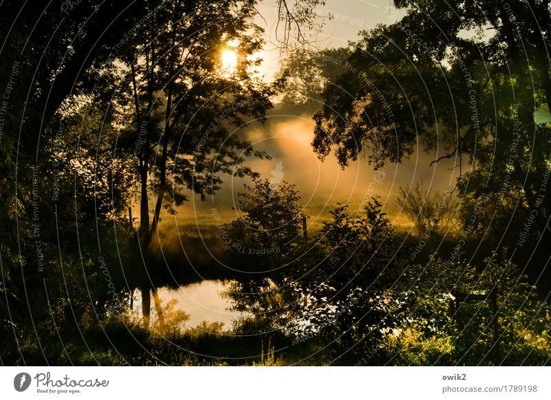 Nature Plant Water Tree Landscape Calm Environment Sadness Autumn Grass Exceptional Illuminate Air Fog Idyll Bushes