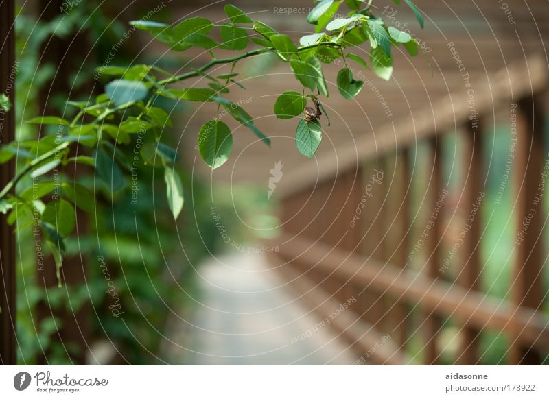 Summer Garden Wood Lanes & trails Park Rose Bridge Asia Flower Tendril Framework Korea