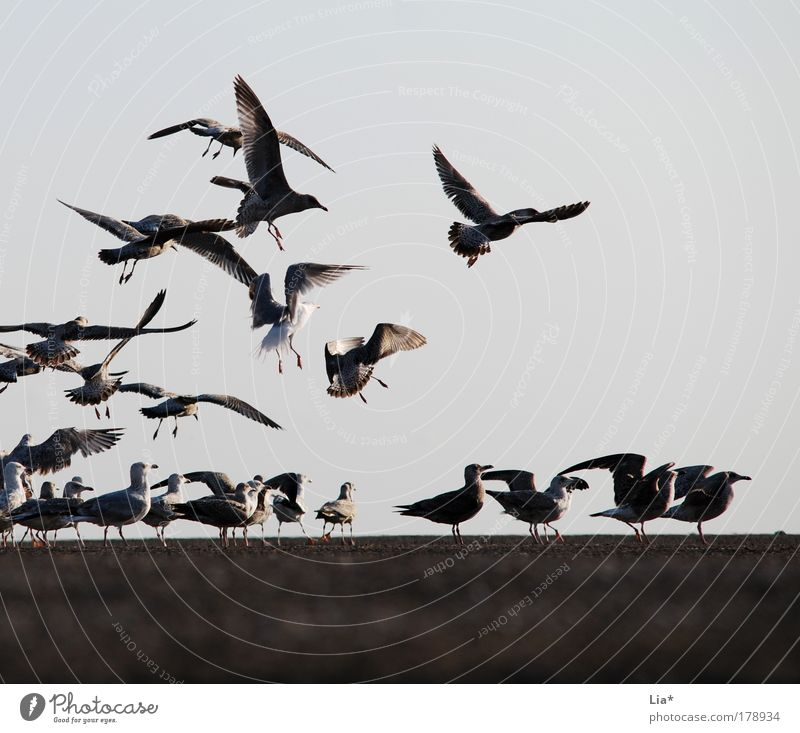 meeting place Colour photo Exterior shot Twilight Wing Seagull Group of animals Flock Flying Chaos Date Many To swarm Freedom Herd Accumulation Meeting point