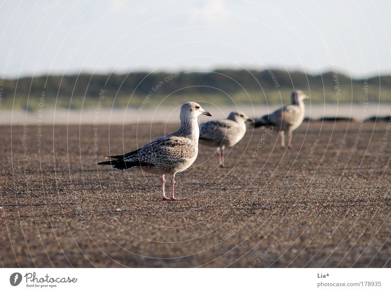 Calm Animal Friendship Bird Sit Group of animals Vantage point Team Wing Serene Boredom Seagull Row of seats Crouch 3