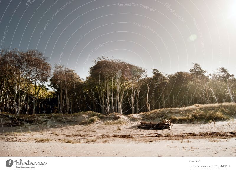 Wood and sand Environment Nature Landscape Plant Air Cloudless sky Autumn Climate Beautiful weather Warmth Tree Bushes Beach Baltic Sea Sandy beach