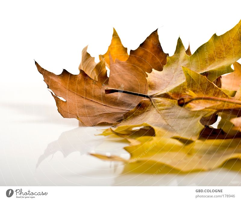 Nature Old Plant Leaf Yellow Emotions Autumn Natural Brown Gold Transience Warm-heartedness Change Dry Distress