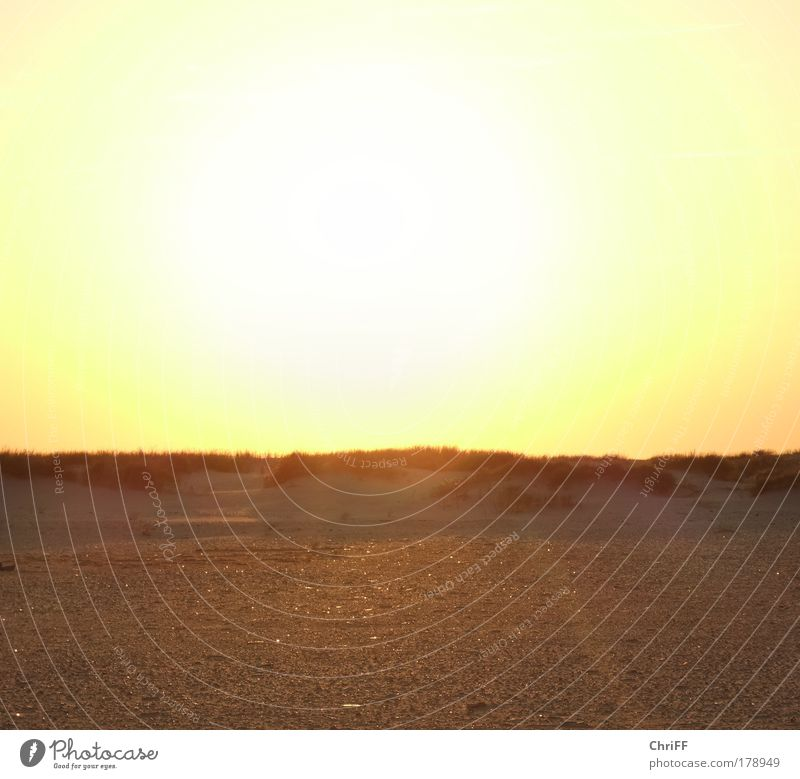 It burns... Vacation & Travel Landscape Sand Cloudless sky Beautiful weather Warmth Drought Grass Bushes Marram grass Hill Beach North Sea Island Amrum