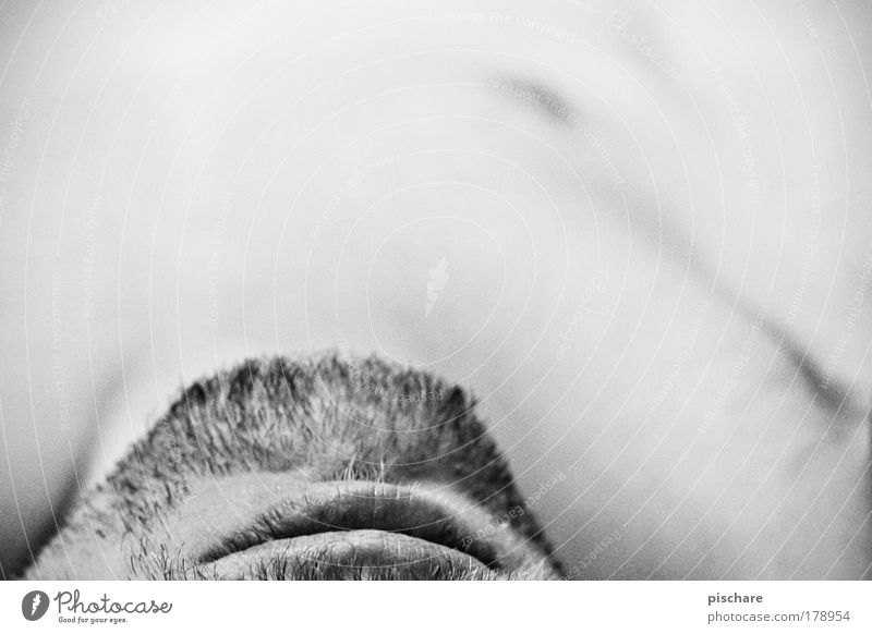 face vs. text space Black & white photo Detail Copy Space top Contrast Shallow depth of field Body Skin Human being Masculine Man Adults Mouth Lips Facial hair