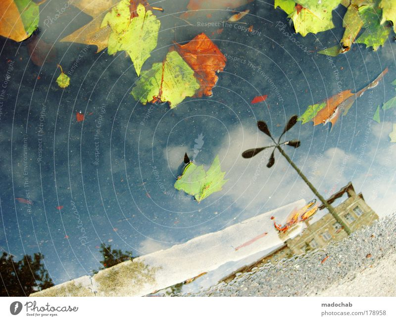 Water City Leaf Far-off places Autumn Rain Landscape Environment Drops of water Hope Safety Dangerous Climate Protection Gale Passion