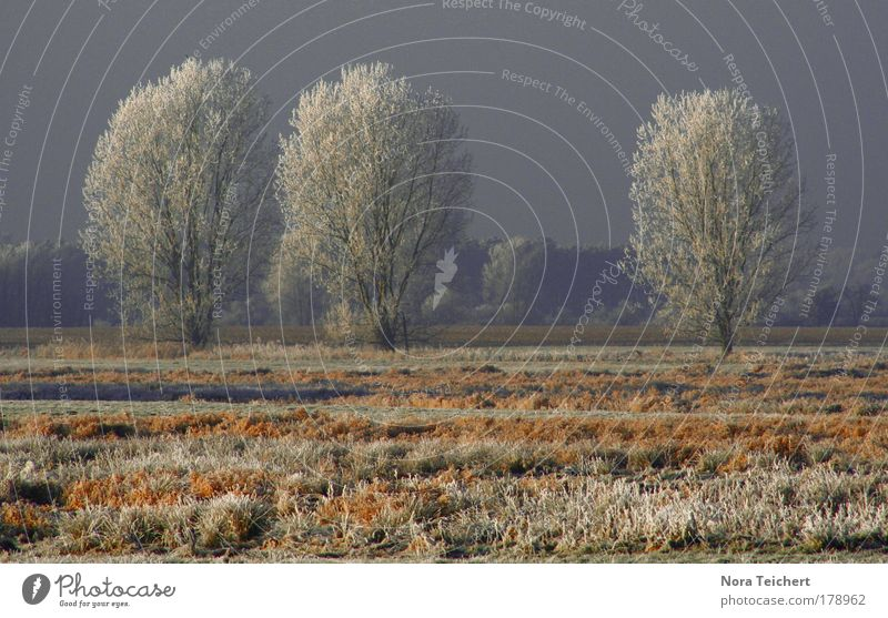 50 Subdued colour Exterior shot Deserted Day Contrast Central perspective Long shot Environment Nature Landscape Plant Animal Winter Ice Frost Snow Tree Grass