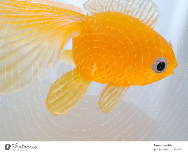 rubber fish Toys Fish Orange Close-up