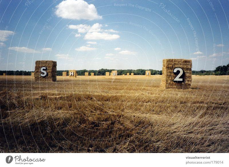 Nature Field Art Communicate Sculpture Work of art Stubble field