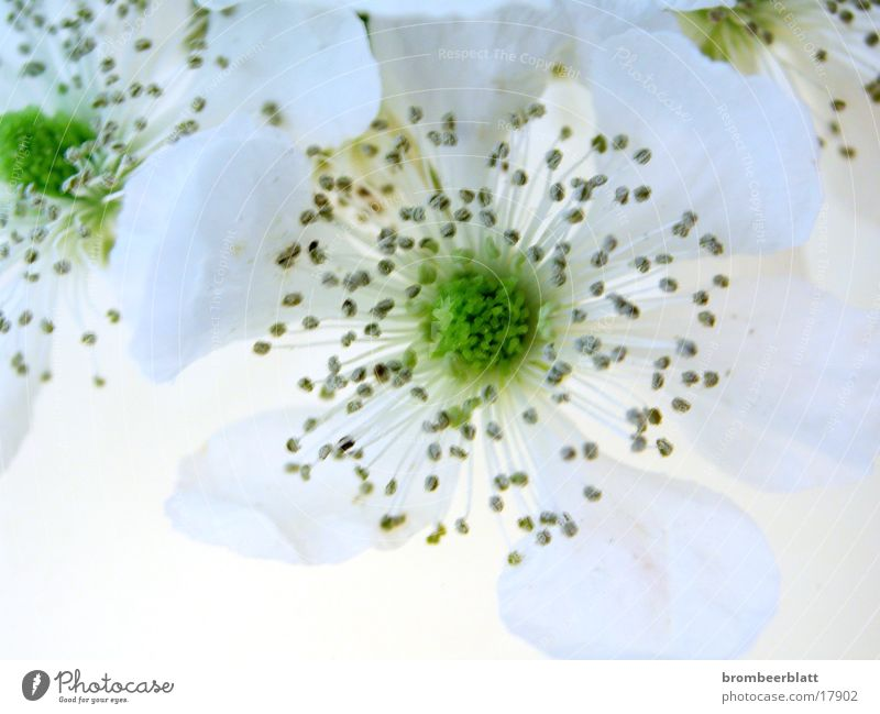 Flower Blossom Spring