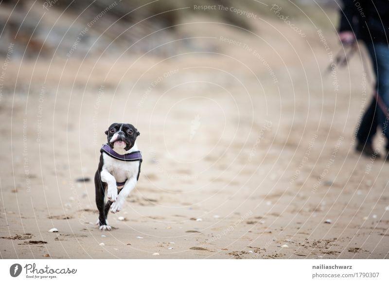 Dog Nature Relaxation Animal Joy Beach Black Natural Coast Happy Brown Sand Jump Happiness Walking Cute