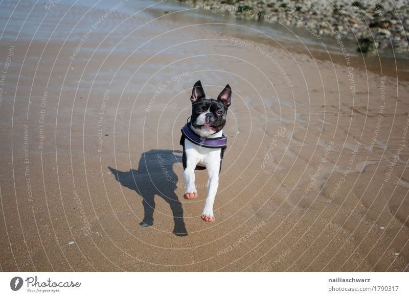 Dog Nature Vacation & Travel Beautiful Landscape Animal Joy Beach Natural Sports Coast Healthy Happy Sand Happiness To enjoy