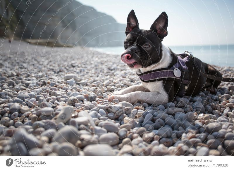 Nature Dog Vacation & Travel Ocean Landscape Animal Beach Environment Coast Playing Rock Together Friendship Europe Beautiful weather Observe