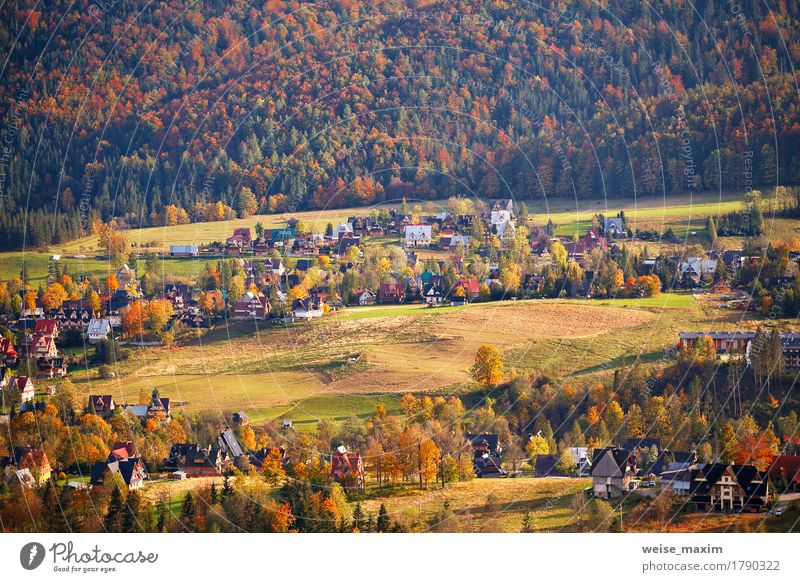 Sunny October day in Malopolska mountain village Nature Vacation & Travel Plant Green Tree Landscape Red House (Residential Structure) Forest Mountain Street Yellow Meadow Autumn Grass Building