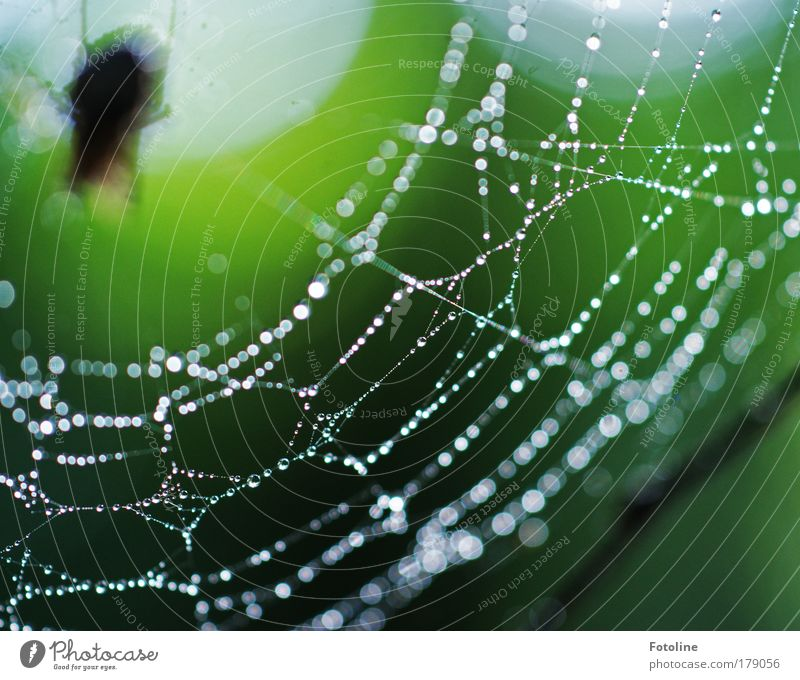 Nature Water Green Animal Environment Park Rain Weather Wild animal Wet Esthetic Drops of water Dew Spider Spider's web