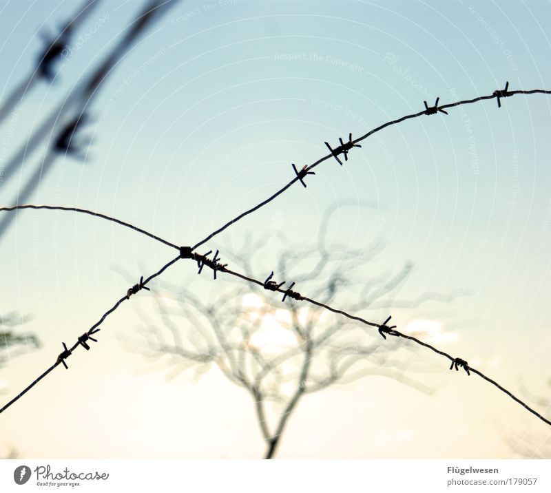 Tree Loneliness Far-off places Freedom Lifestyle Dangerous Threat Leisure and hobbies Infinity Distress Captured Penitentiary Fear of the future Barbed wire