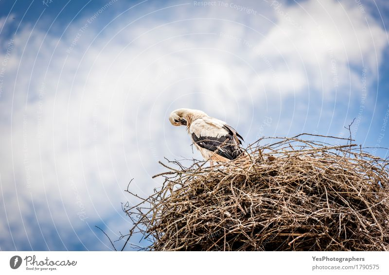 White stork against blue sky Sky Clouds Storm clouds Summer Animal Wild animal Bird 1 Long Blue animals background Beak beutiful bird photography black feathers
