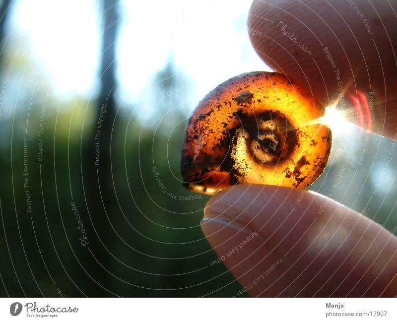 ...for rent Snail shell Empty Back-light Hand Fingers