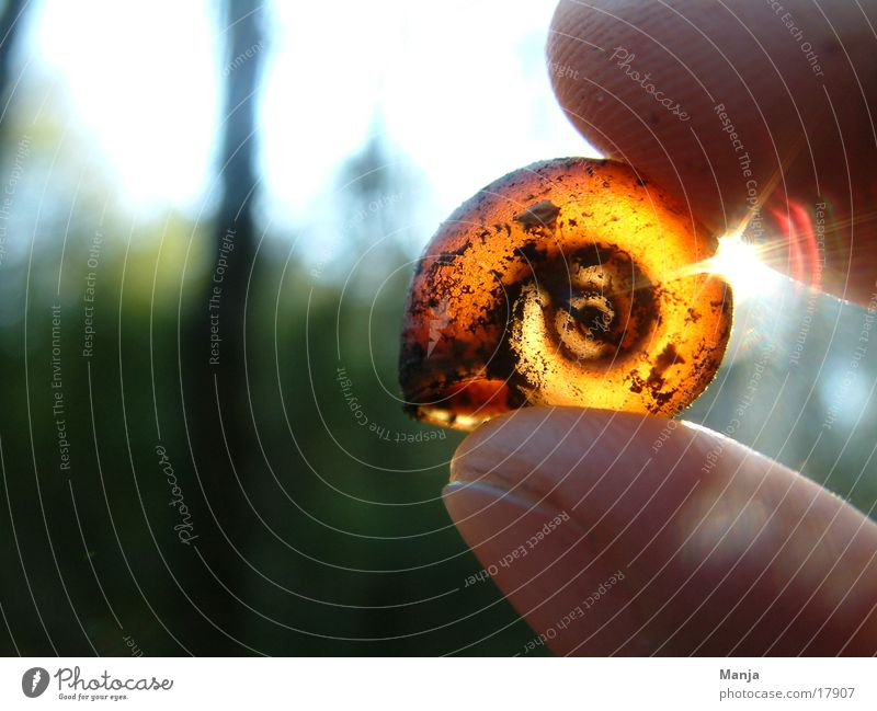 Hand Empty Fingers Snail Snail shell