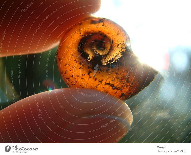 Hand Sun Empty Fingers Snail Snail shell