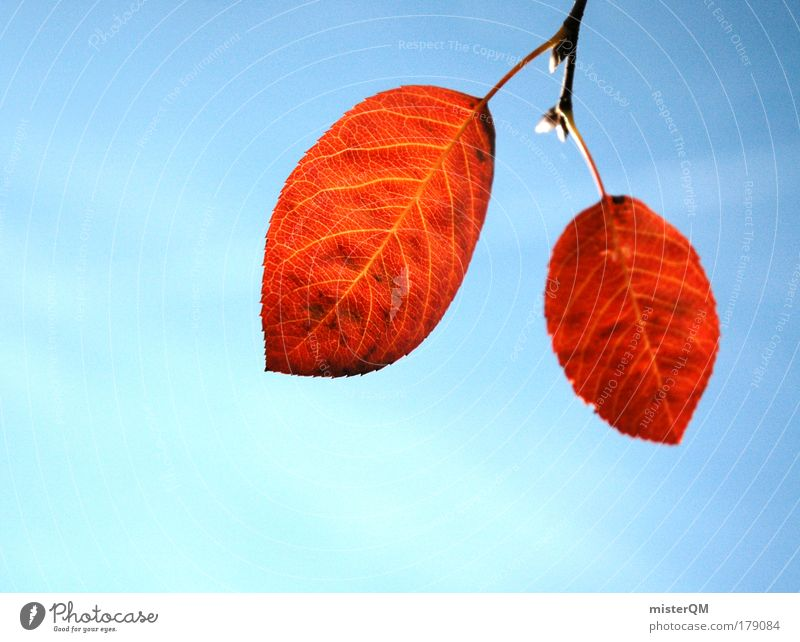 Nature Tree Blue Red Leaf Life Cold Autumn Death 2 Together Weather Time Esthetic Transience