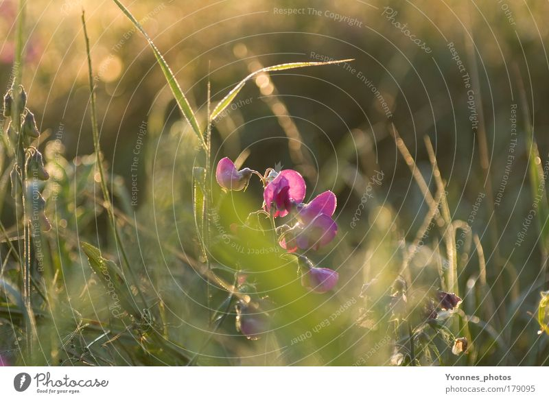 Nature Flower Plant Summer Calm Animal Autumn Meadow Blossom Grass Spring Park Landscape Field Environment Drops of water