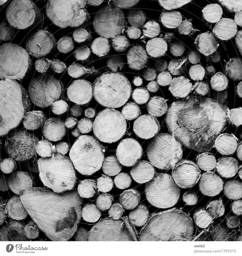 pattern Environment Nature Autumn Tree Tree trunk Lie Together Round Many Heavy Difference Cut Stack Black & white photo Exterior shot Detail Pattern
