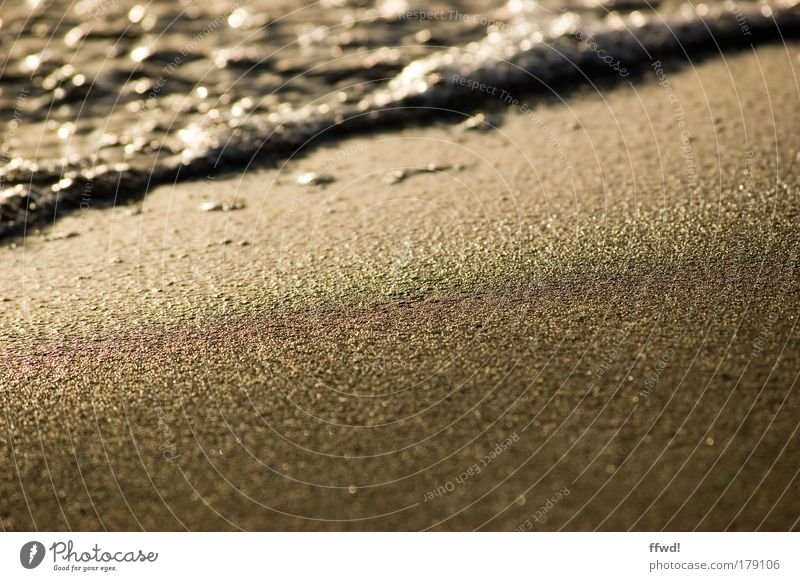 Sand & Beach Colour photo Exterior shot Morning Day Light Shallow depth of field Worm's-eye view Relaxation Calm Vacation & Travel Freedom Ocean Waves