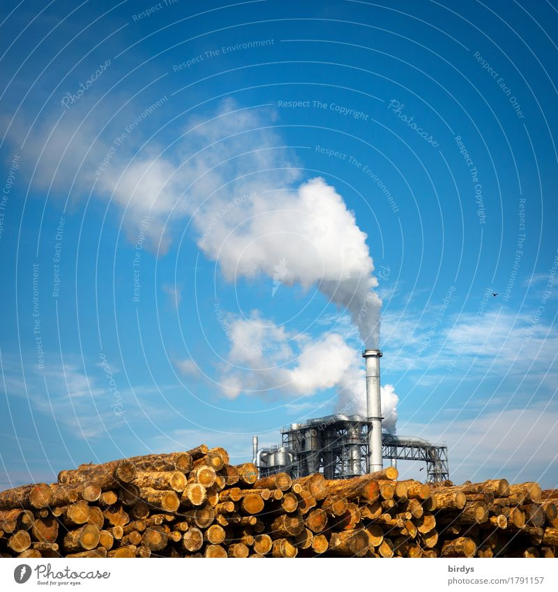 heating Economy Agriculture Forestry Industry Energy industry Renewable energy Sky Clouds Beautiful weather Tree Industrial plant Smoking Authentic Exceptional