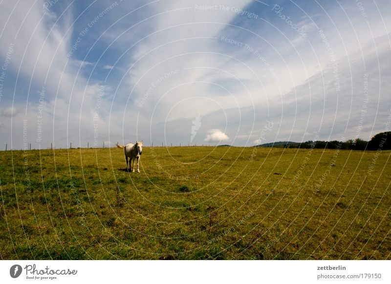 Sky Summer Loneliness Meadow Grass Landscape Wait Horse Lawn Stand Agriculture Pasture Butcher Animal Slaughterhouse Horse breeding