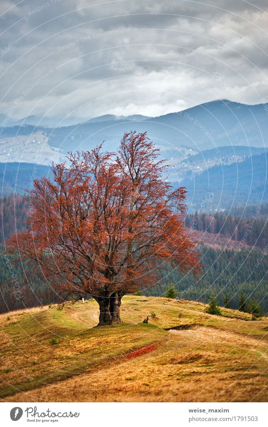 Lone tree in autumn mountains Beautiful Vacation & Travel Tourism Trip Mountain Environment Nature Landscape Sky Clouds Storm clouds Autumn Fog Rain Tree Grass