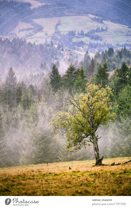 Autumn foggy Carpathian mountain scene. Fall rain and mist Sky Nature Summer Green Beautiful Tree Landscape Clouds Forest Mountain Environment Meadow Natural