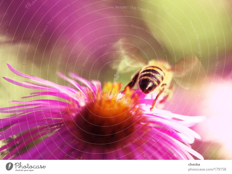 Nature Flower Plant Summer Animal Meadow Emotions Spring Park Moody Field Environment Flying Bee