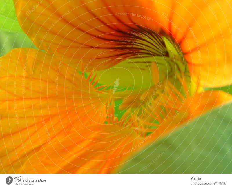 Flower Green Yellow Blossom Orange