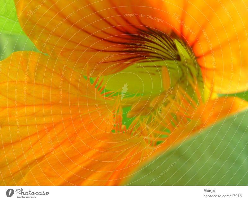 Flower Green Yellow Blossom Orange