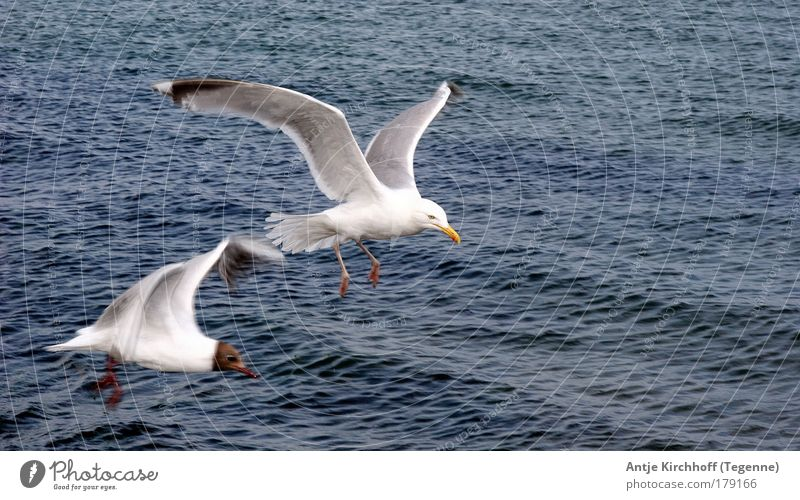 Nature Blue Water White Summer Ocean Animal Coast Air Brown Bird Waves Flying Island Wing Beautiful weather