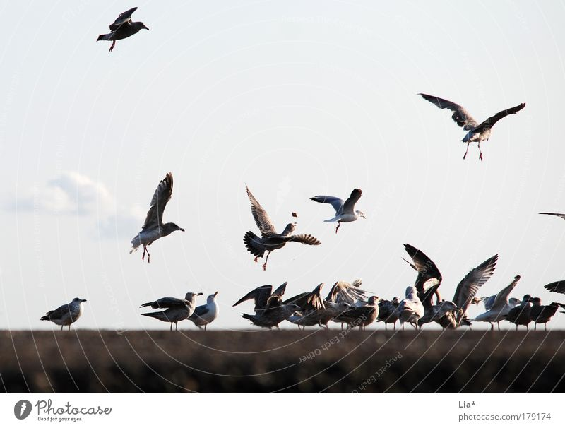 Animal Bird Flying Group of animals Wing Catch To feed Seagull Feeding Herd Flock Meeting point
