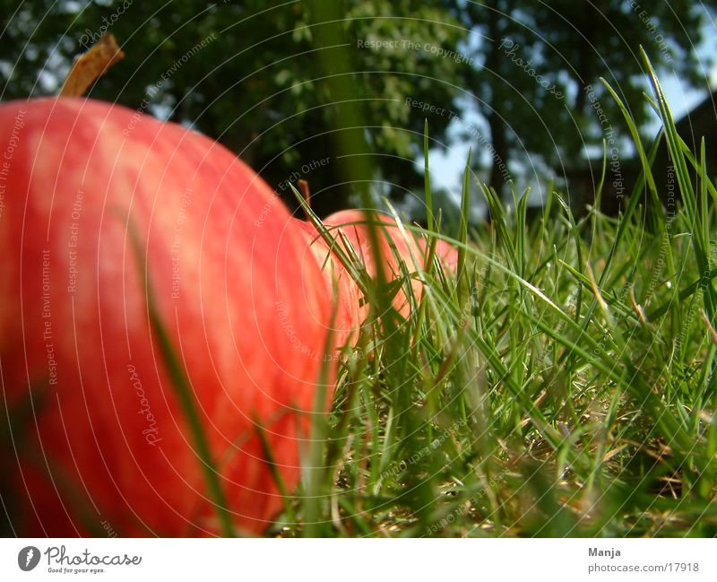 apple parade Meadow Grass Tree Red Green Apple Lawn Sky