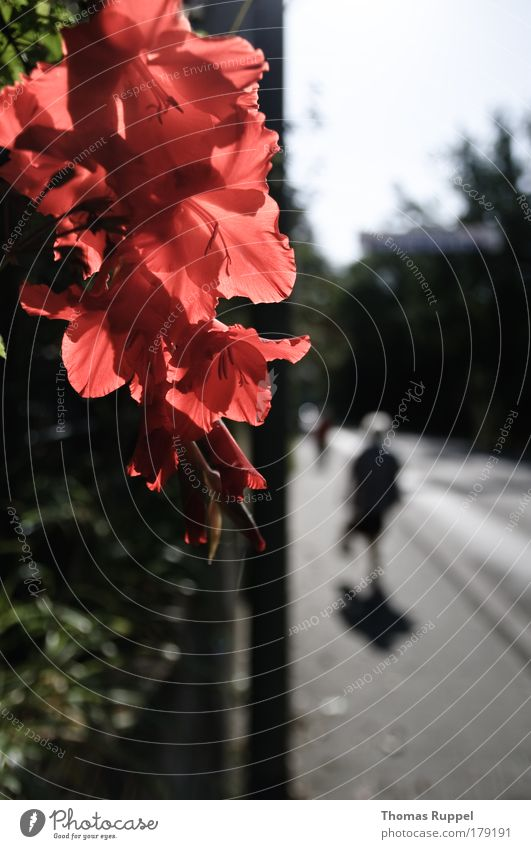 flower edge Colour photo Exterior shot Copy Space right Copy Space bottom Day Shadow Contrast Silhouette Sunlight Central perspective Long shot Human being 1