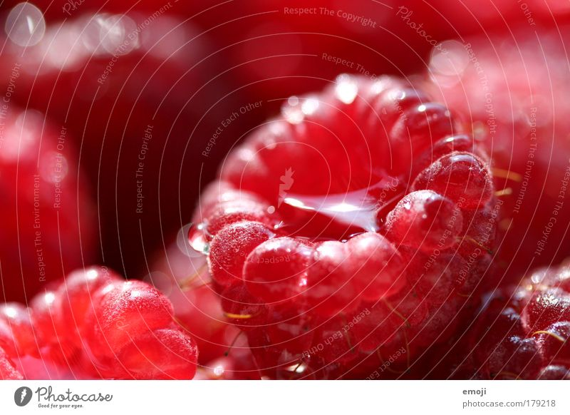 now it's raining raspberries Colour photo Exterior shot Close-up Detail Macro (Extreme close-up) Shallow depth of field Fruit Raspberry Nutrition