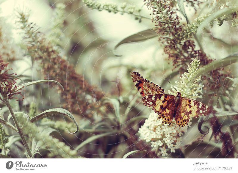 Et je rêve des papillons Colour photo Subdued colour Copy Space left Copy Space top Day Animal portrait Elegant Exotic Harmonious Senses Fragrance Environment