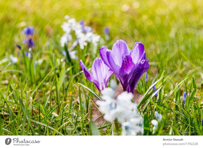 spring Lifestyle Harmonious Easter Nature Plant Spring Flower Grass Meadow Blossoming Growth Friendliness Fresh Positive Juicy Green Moody