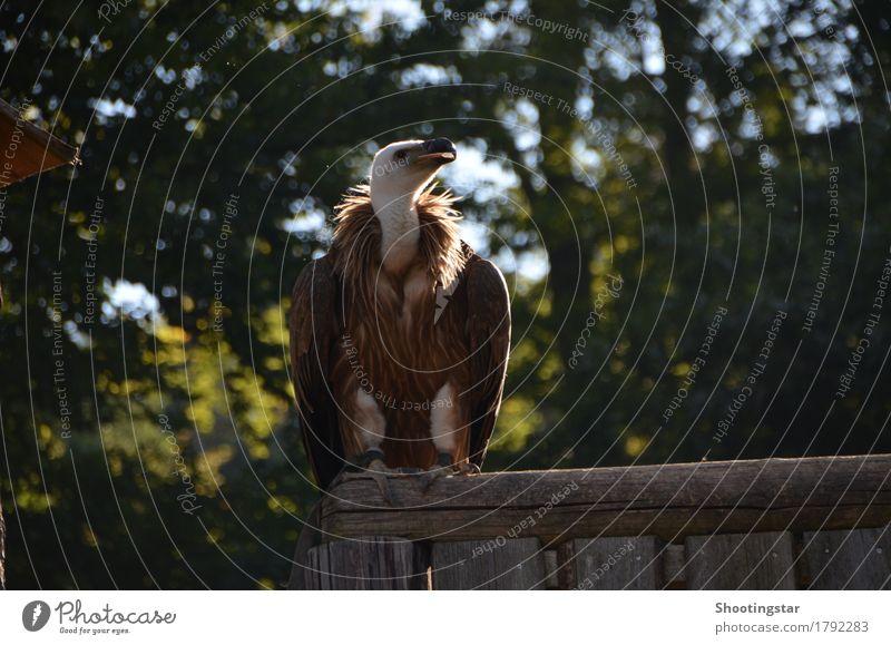 Vulture 2 Animal Wild animal Bird Wing Zoo 1 Power Death Colour photo Exterior shot Twilight