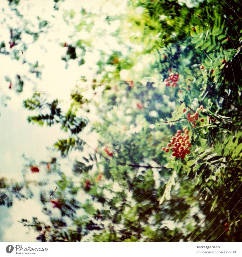 Nature Beautiful Berries Green Plant Red Summer Forest Blossom Lomography Sadness Park Medicinal plant Environment Fruit Growth